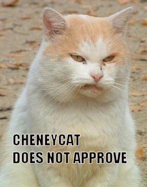 cheneycat