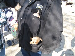 pocketful of puppies