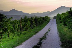 Strada tra le vigne - The street in the vineyard photo by emorpi