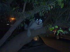 قطوتي photo by ظمــــــ(انتي)ــــــاي