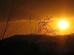 Sunset Grass - My Crop