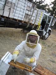 Tim Steals some Honey