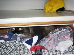 Pooh Hiding