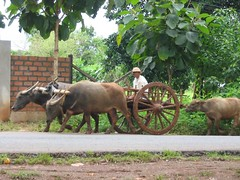2039 Oxcart