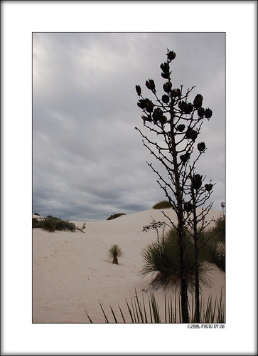 White Sands morning C