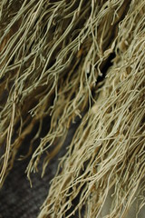 Business end of plaited broom