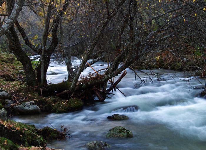 La ribera enmarañada (II)