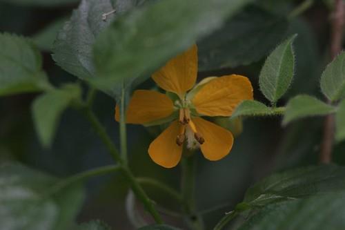 IMG_0198 Unknown flower