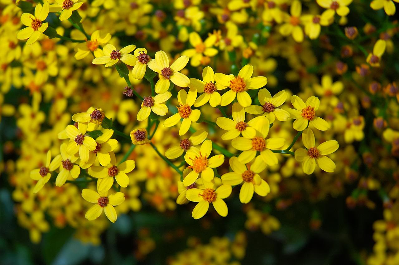 Barcelona Photoblog: Wild Yellow Flowers