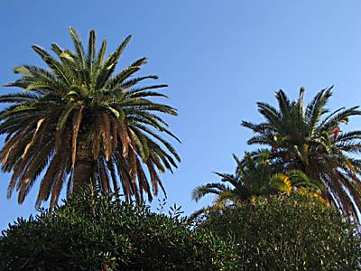 Palmiers sous le soleil
