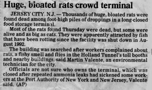 Huge Bloated Rats