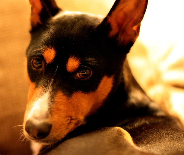 Tags: Antihistamine For Dogs With Allergies, Claritin D