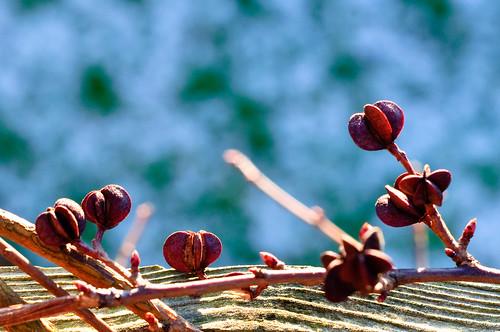 5/365 Obligatory winter berries shot