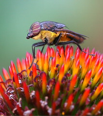 Fly On Flower photo by Chi Liu