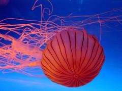 parachute in the sea - Ya Ya photo by don2g