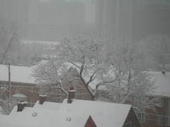 [tree in snowstorm]