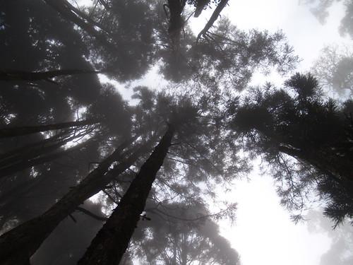忘憂森林2 211