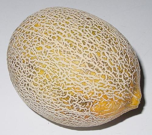 Cantalope Harvest-083104