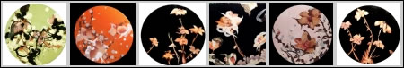 Porn Flowers