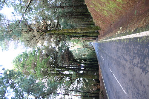 Bosque de la Esperanza - The forest of Hopes