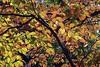 leaf-canopy.jpg