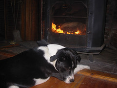puppy woodstove2