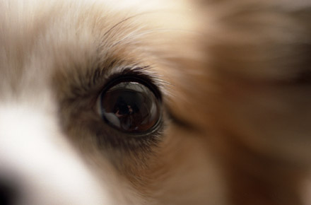 ルルの瞳に恋しちゃう?
