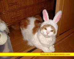 disfraz gato carnaval 2006051612_1374174992