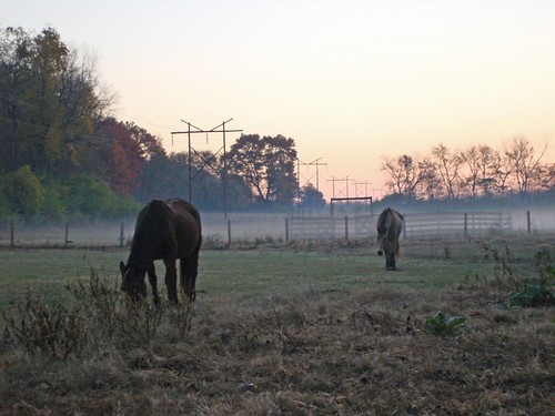 Horses in the Early Morning Fog