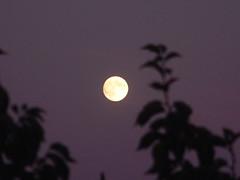 061104-moon019