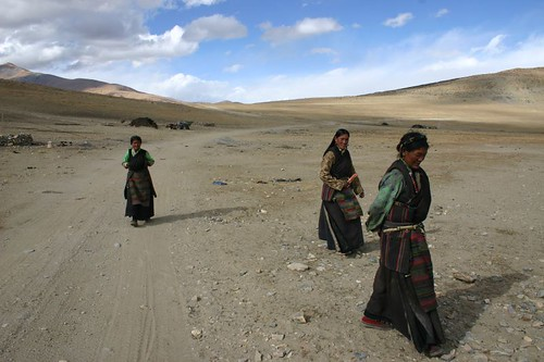 Sudden guests at the Tibetan Plateau! You're most welcome, ladies!
