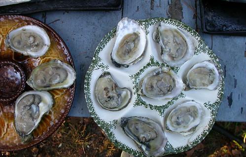 10 wellfleet oysters