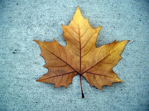 concrete leaf
