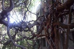 treeper