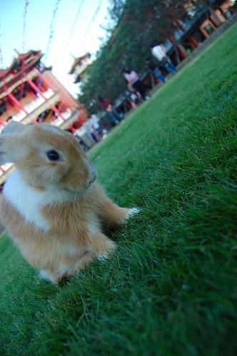 小兔(白)8