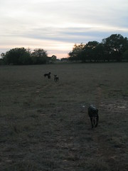 The ranch is doggie heaven…