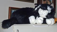 13 kitty mascot