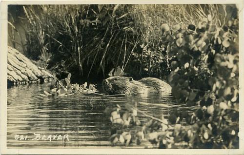 Beaver-of-Canada.ca.1935.00