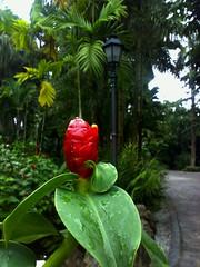 Halia, Botanic Gardens