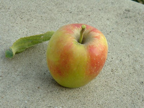 My first apple of the season
