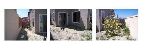 houseyard