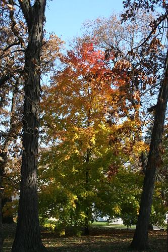 Tricolor Tree