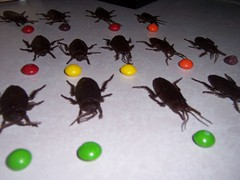 The Cockroaches Are Hungry....