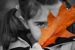 Peering Through Autumn