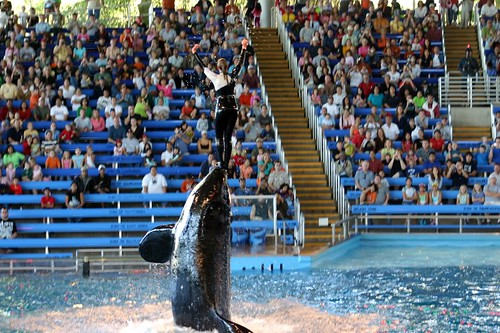 Sea World - Shamu Show