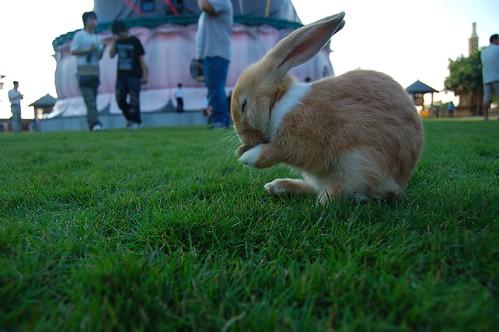 小兔(白)3