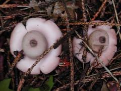 fungi1.JPG