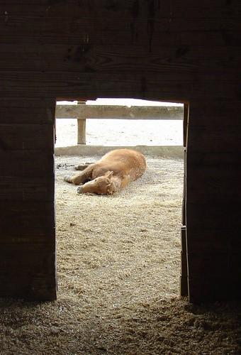 Pony Dreams 2