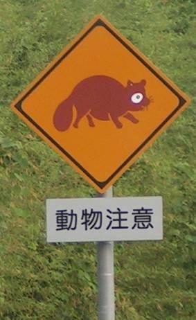 touchez pas au tanuki !