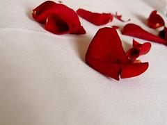 scatteredonbed_petals